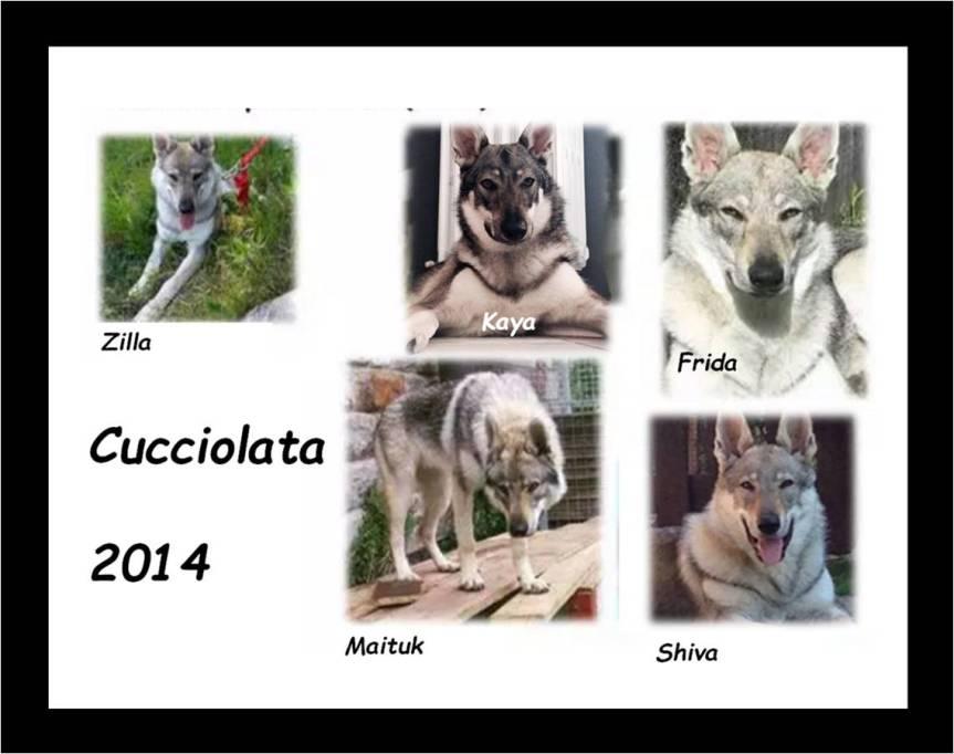 cucciolata 2014 new stretta