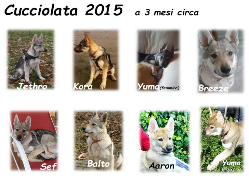cucciolata 2015 new