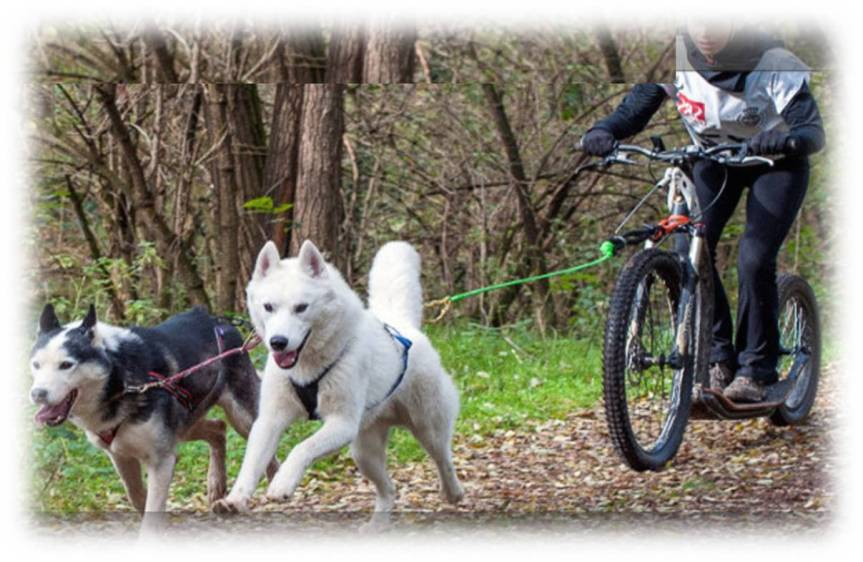 cani crossing mtb