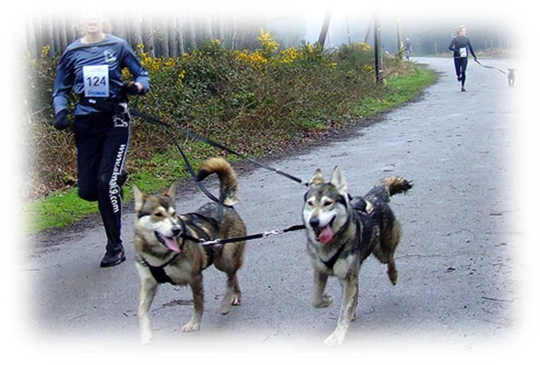 cani crossing piedi