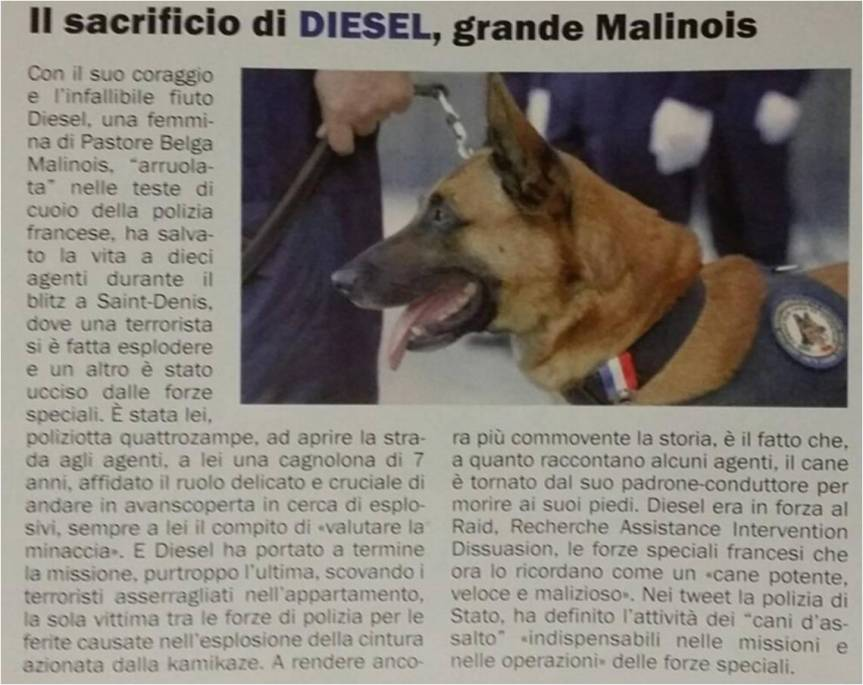 diesel articolo